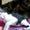 Котята породы ПИТЕРБОЛД, очаровашки-лысики! #1600254