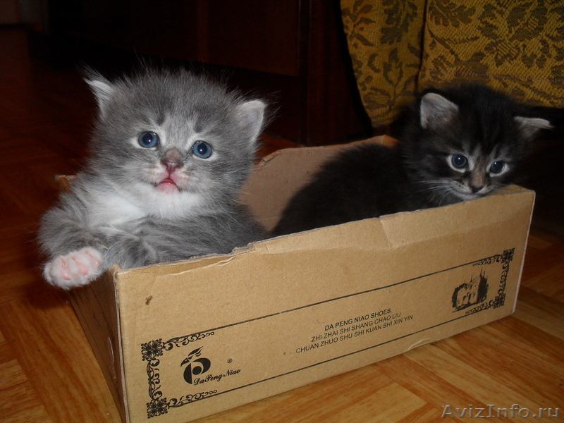 Котята в набережных челнах
