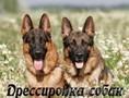 Дрессировка собак c выездом на дом